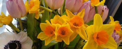 Frühlingsgefühle - bunt verändert Alles